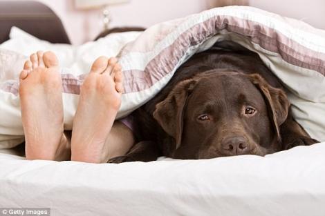 Lasă-ți câinele să doarmă cu tine. Acesta este secretul unui somn odihnitor