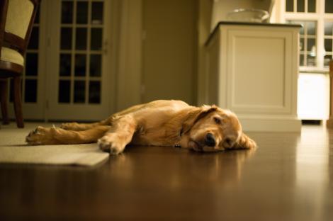 Câinele a fost luat de la un adăpost de animale și adus acasă, dar stăpânii au observat că acesta nu doarme deloc noaptea! Explicația i-a făcut să plângă de emoție