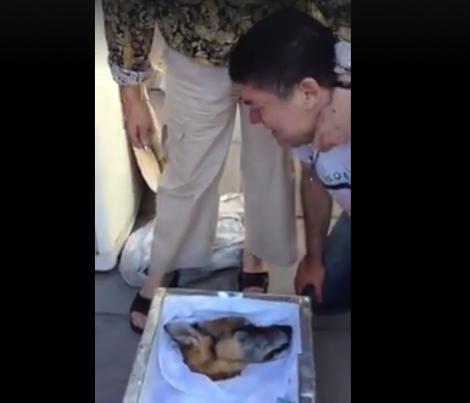 Imagini emoționante! Un bărbat își plânge prietenul mort. Durerea despărțirii de câinele care i-a stat alături este de nealinat (VIDEO)