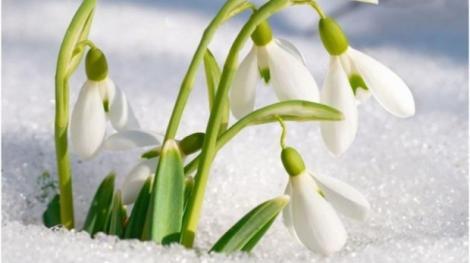 VREMEA 30 ianuarie.Temperaturi de primăvară în toată România