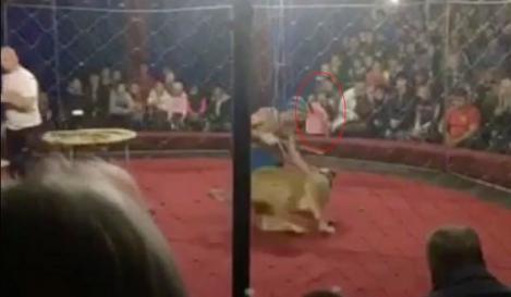 Spectacol de circ MACABRU! O leoaică s-a năpustit asupra unei fetițe. Imagini ȘOCANTE! – FOTO