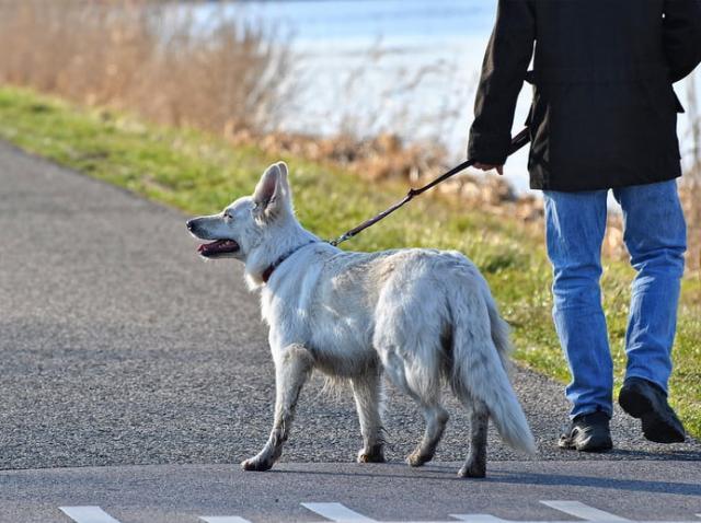 Stăpânii de câini nu mai au voie să își plimbe câinele ziua! Ce alte reguli bizare există