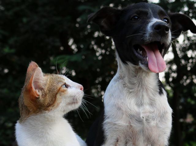 Vestea momentului pentru stăpânii de câini sau pisici! Unde se fac castrări gratuite