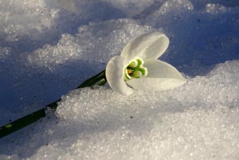 Meteorologii au anunțat când scăpam de valul de frig. Primăvara își face apariția mai devreme decât ne-am aștepta
