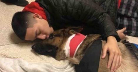 Eroul zilei: un câine încasează un glonț, pentru a-și proteja stăpânul