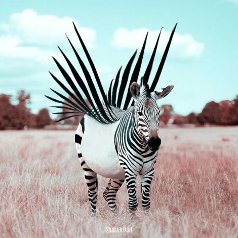 Imagini spectaculoase! Zebra cu aripi, veverița pasionată de shopping și pisica din inima mării! Nu este un film SF, ci realitatea planetei, prin ochii unui artist