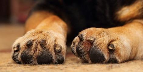 Încearcă să nu plângi! Doi câini au crescut în aceeași casă și erau ca frații! După ce unul din ei a murit, celălalt a făcut ceva incredibil!