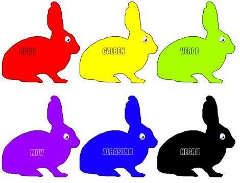 Ce fel de persoană ești în funcție de culoarea iepurașului pe care o alegi! Cel mai tare test înainte de Paște!