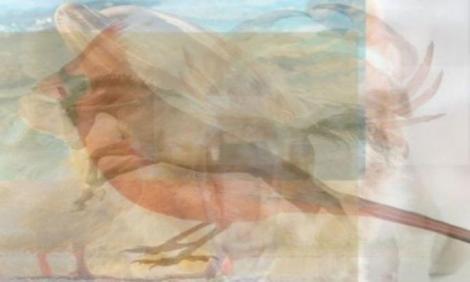 Test de personalitate. Privește imaginea, ce animal distingi pentru prima oară? Cal, delfin, urs sau cățeluș?