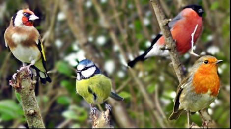 Știi să recunoști o specie de păsări? Descoperă micile vietăți în singurul parc natural urban din țară! Duminică, bucureştenii beneficiază de tururi ornitologice GRATUITE