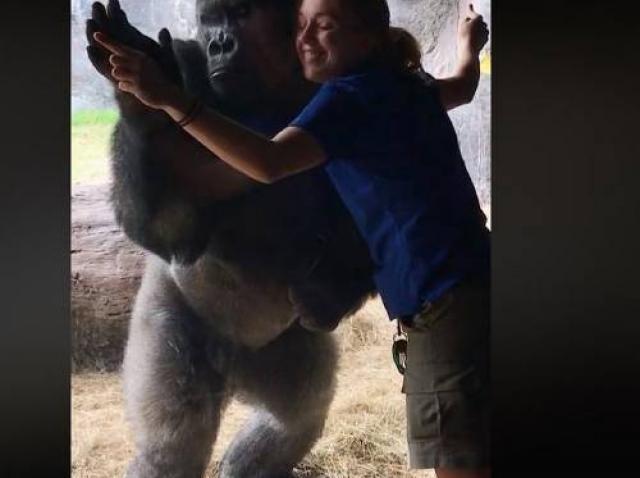 Femeia s-a apropiat de cușca unei gorile, dar lucrurile au luat-o complet razna! (VIDEO)
