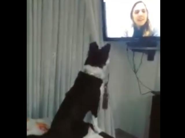 Câinele și-a recunoscut stăpâna la televizor și reacția a fost de milioane! Ce a făcut animalul