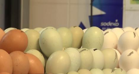 În piețe au apărut ouăle VERZI de găină! Cu ce sunt diferite față de cele obișnuite?