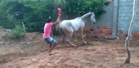 Acțiune și reacțiune! Ce a pățit bărbatul din imagini, după ce a încercat să-și lovească propriul cal (VIDEO)