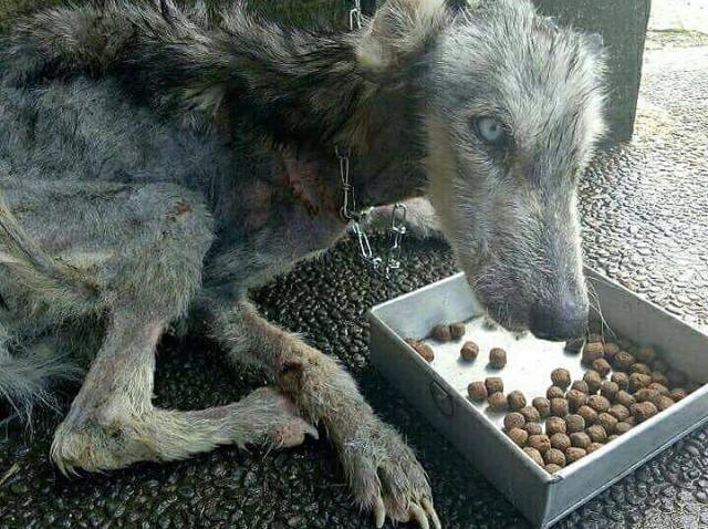 Un tânăr a salvat un câine de pe stradă, dar apoi a trăit o adevărată surpriză! Cum s-a transformat animalul