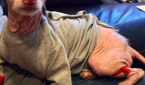 Un bărbat a găsit o creatură bizară pe stradă și a dus-o la un adăpost! Ce descoperire a făcut după
