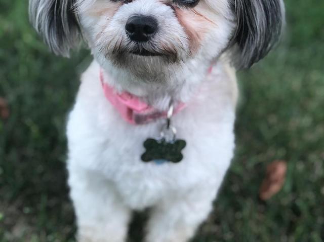 Un câine a furat proteza dentară a stăpânului și lucrurile au luat-o razna! Ce s-a întâmplat