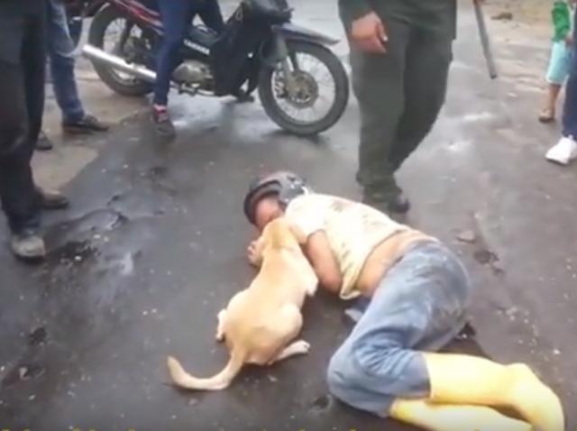 Cum reacționează un câine atunci când stăpânul cade pe stradă (VIDEO)