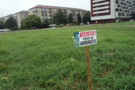 Anunțul de ULTIMĂ ORĂ pentru proprietarii de terenuri! S-a stabilit data până când trebuie să elimine ambrozia ca să nu fie sancționați! Mii de români au ajuns la medic