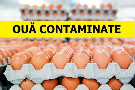 Ouă toxice, în România! Inspectorii sanitari din Teleorman au făcut o descoperire șocantă