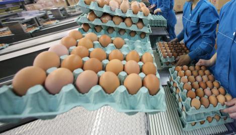 Ouă cu substanțe împotriva cancerului! Au fost descoperite recent și ar putea revoluționa lupta împotriva acestei boli