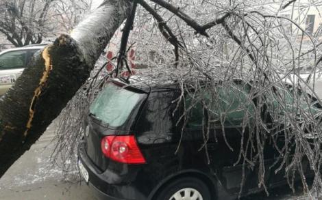 În atenția șoferilor! Daunele produse de copacii căzuți pe mașini pot fi despăgubite de asigurarea auto. Care sunt condițiile