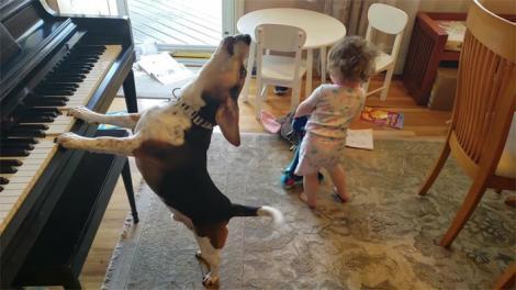 VIDEO - De necrezut! Un câine talentat cântă la pian pentru un copilaș