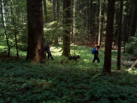 Vrancea: Bărbatul dispărut în pădure şi căutat de zeci de persoane a fost găsit decedat