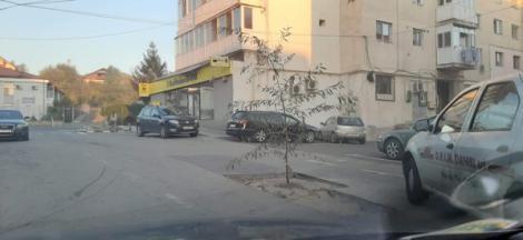 """Un copac a răsărit în mijlocul străzii! Protestul unui bărbat care și-a distrus mașina într-o groapă nu a fost ignorat de primar: """"Să le dea Dumnezeu sănătate!"""""""