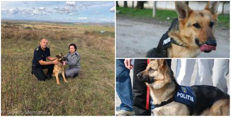 Şase câini poliţişti pensionari, oferiți spre adopție, gratuit, iubitorilor de animale! Ce trebuie să facă doritorii