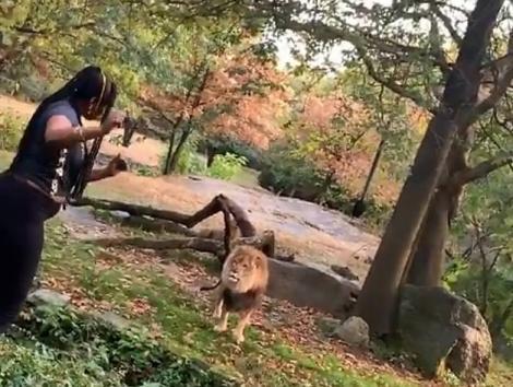 Nebunie completă! A intrat în țarcul leului și a dansatîn fața lui! Imagini șocante! Video