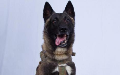 """Trump, ironizat pe Twitter după ce """"declasifică"""" poza câinelui rănit în operaţiunea împoriva lui al-Baghdadi"""