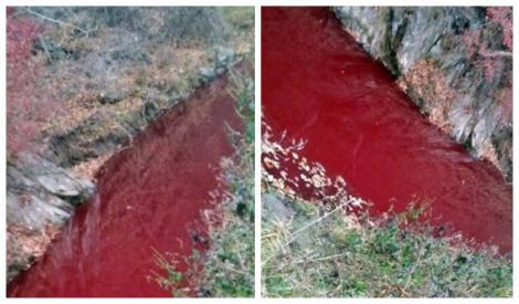 Imagini tulburătoare! Apa unui râu s-a transformat în sânge! Motivul este uluitor! Autoritățile au intervenit de urgență