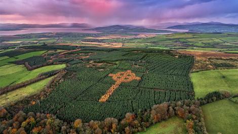 Misterul crucii celtice care apare toamna într-o pădure din Irlanda de Nord