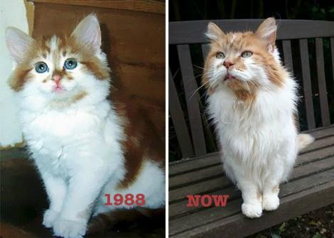 Foto - Rubble este cea mai bătrână pisică din lume! Aceasta are vârsta cât jumătate din media de viața a unui om.
