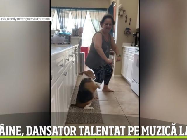 VIDEO incredibil!! Nu îți va veni să crezi ce mișcări are acest câine! Dansează latino și urmărește camera de filmat