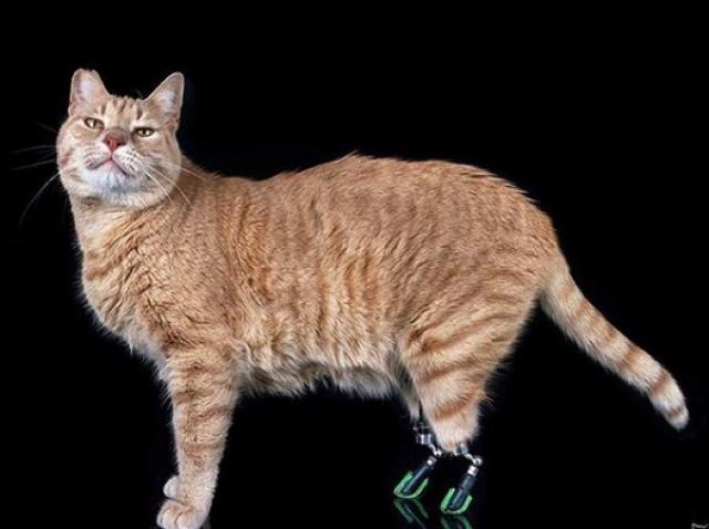 Vituzzo, pisica superstar din Italia. Felina ,fără lăbuțele din spate după un accident, a devenit vedetă pe Instagram