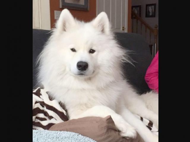 O femeie și-a dus câinele la veterinar, dar a trăit un adevărat șoc! Descoperirea a lăsat-o mută