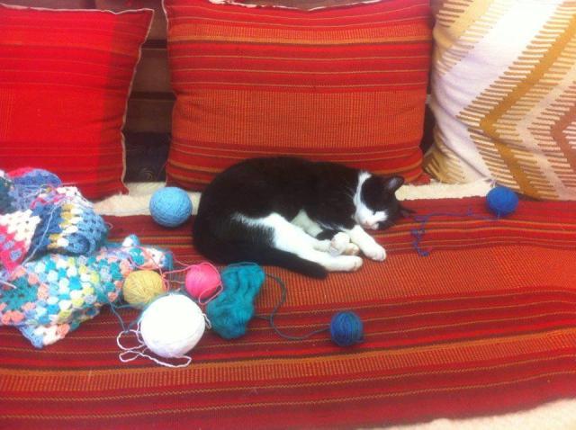 """Mici-Pisica Cetății Oradea, vedetă pe Facebook. """"Meseriașa"""" îi învață pe copii să tricoteze și să brodeze"""