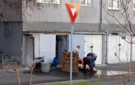 S-a apucat să își tranșeze porcul în spatele blocului, printre mașini. După amenda primită de la Poliție, orădeanul va manca cei mai scumpi cârnați din viața lui!