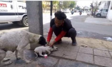 Video. O cățelușă cere cu disperare ajutor pentru a-și salva puiul lovit de mașină! O mamă în adevăratul sens al cuvântului