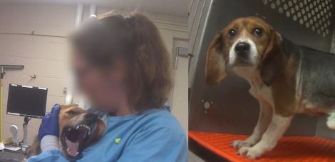 Câini forțați să înghită fungicid și apoi ținuți în cuști și despicați pentru a se observa efectele!