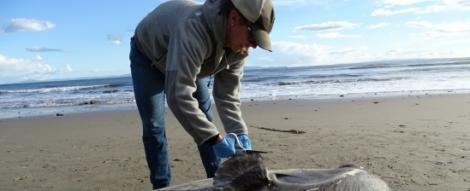 Pește straniu găsit pe plajă! Specialiștii sunt în stare de șoc! Cum arată bizara ființă