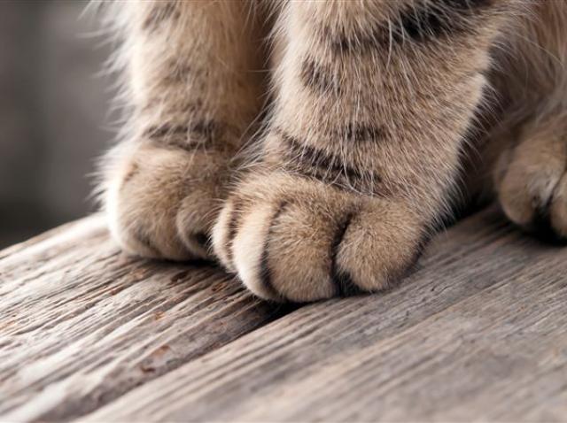 Un băiat a ajuns la psihiatrie, din cauza zgârieturii de pisică! Ce simptome a avut