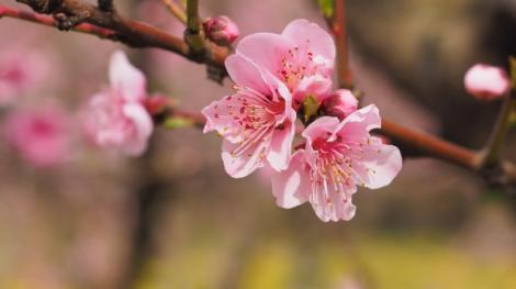 Vremea în weekend 22-24 martie. Se anunță vreme deosebit de frumoasă şi caldă