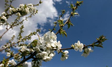 Vremea 30 martie. Prognoza meteo anunță temperaturi în creștere