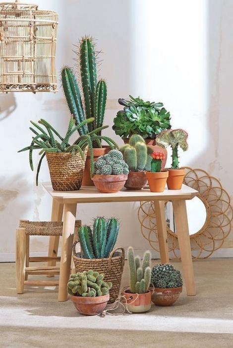 Plante de apartament: Cactus - de ce e bine să-ți decorezi casa și grădina cu el
