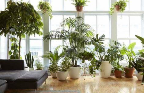Plante de apartament otrăvitoare. La ce flori toxice să fii atent