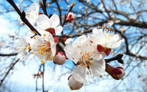 Vremea în weekend 5-7 aprilie. Prognoza meteo anunță zile răcoroase