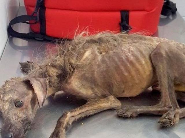 O femeie a găsit un câine în stare gravă pe drum și l-a luat acasă! În scurt timp a trăit o surpriză de zile mari!